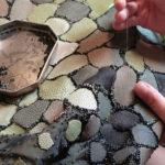 Emmanuelle Dupont. création du corset serpent, galuchat, perles de verres
