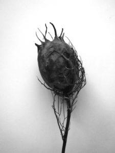 herbier-fantastique-sculptures-textiles-végétaux