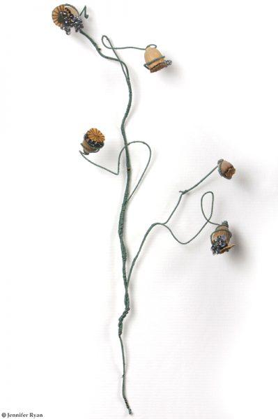 Pavot fané. Série des fleurs insectes.