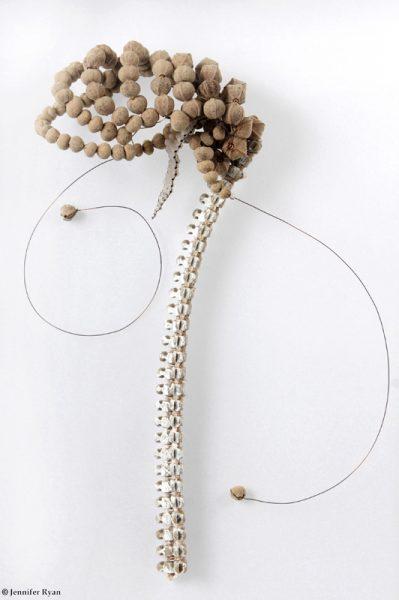 Squelette. Série des fleurs insectes.