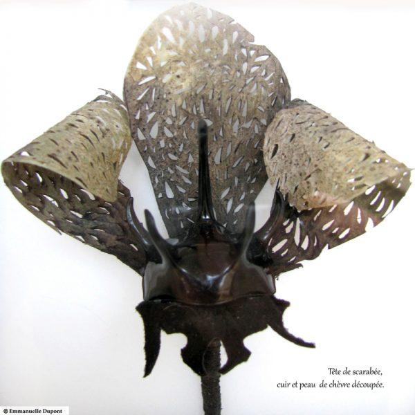 Ombre. Série des fleurs insectes.